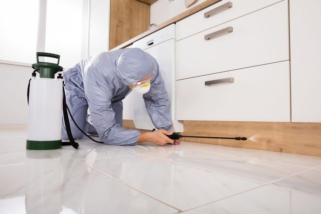 Tips for Choosing the Right Pest Control Company